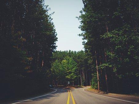 Street, Road, Forest, Travel, Way, Highway, Outdoor