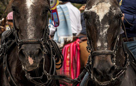 Horses, Ride, Horses Throw, Truck