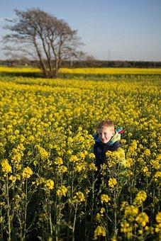 Meadow, Field, Yellow Flower, Hide And Seek, Tree