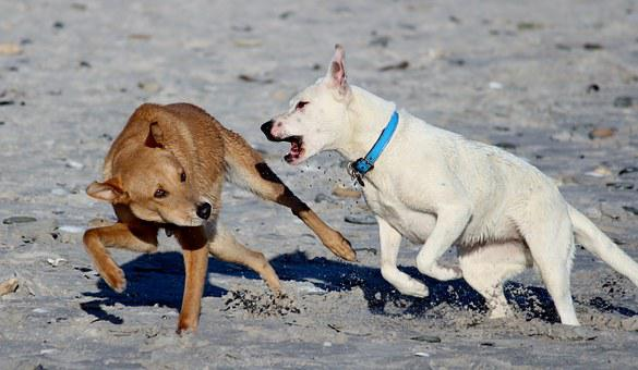 Dogs, Beach, Romp, Play, Fun, Run, Bite, Snout, Frolic