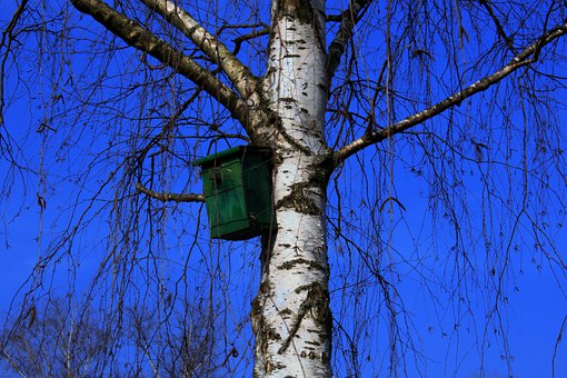 Aviary, Tree, Birch, Bird Feeder, Sky, Blue, Azur