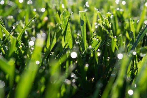 Bokeh, Close Up, Green Grass, Macro, Macro Photography