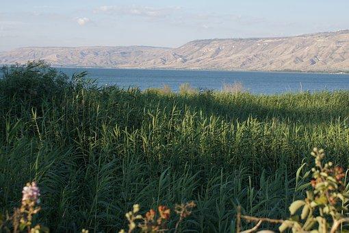 Sea Of Galilee, Lake, Reed, Israel, Mood, Water
