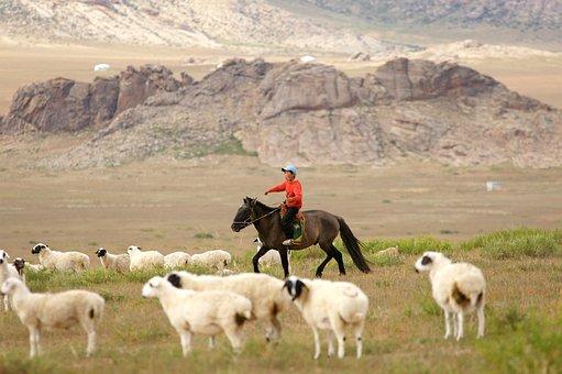 Mongolia, Horse, Rider, Boy, Animals, Herder, Shepherd