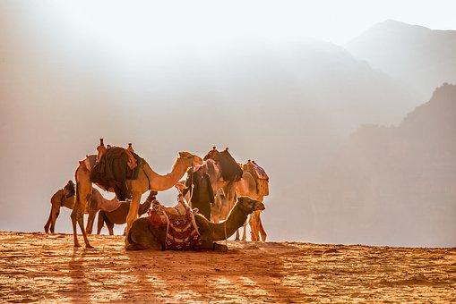 Jordan, Wade Rooms, Camel, Dromedary, Solar, Desert