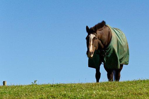 Horse, Animal, Grass, Horse Blanket, Blue Sky
