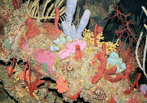 Corals, Nature, Still, Life, Colorful, Tropical, Reef