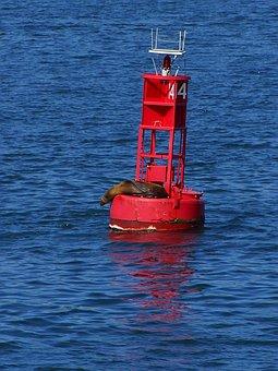 Boje, Seal, Light, Lighthouse, Beacon, Sea, Ocean