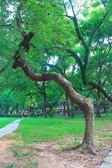 Canton, Sun Yat-sen University, Green, Tree, Campus