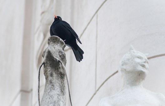 Blackbird, Bird, Feather, Wing, Nature, Animal, Fly