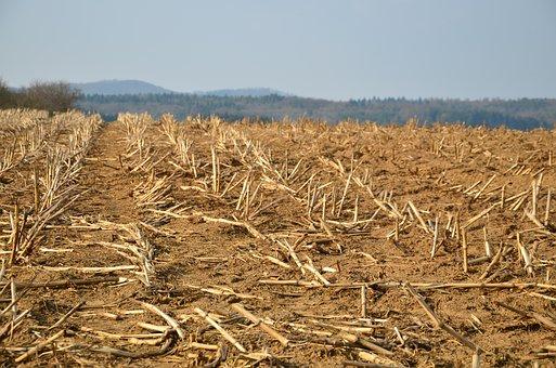 Stubble, Glean, Field, Cornfield, Harvested