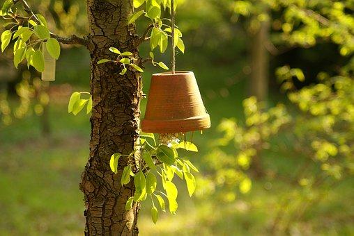 Tree, Hanging Flower Pot, Garden, Fruit, Summer, Green