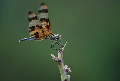 Dragonfly, Insect, Nature, Bug, Fly, Design, Wing