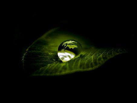 A Drop Of, Water, Zen, Nature, Natural, Rain, Wet, Leaf