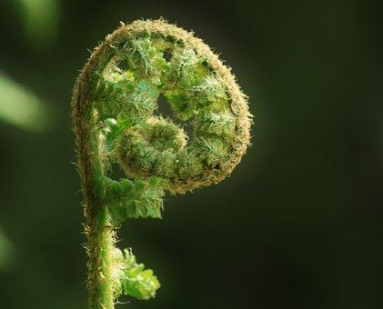 Fern, Forest, Forest Plant, Plant, Flora, Garden