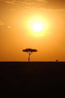 Africa, Kenya, Safari, Silhouette, Sunset, Tree