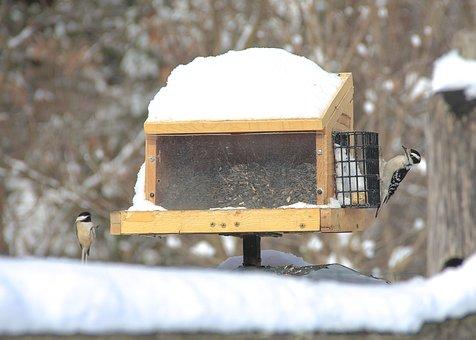 Bird House, Nature, Winter, Snow, Cold, Wildlife