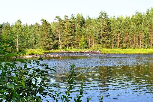 River, Trees, Leaves, Day, Sun, Summer, Landscape