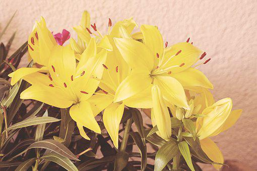 Vintage, Blossom, Bloom, Flowers, Daylily, Yellow