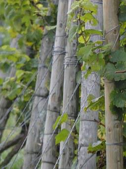 Vines, Wingert, Vineyard, Vineyard Posts, Post, Wire