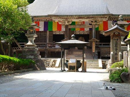 Temple, Cat, Yamadera