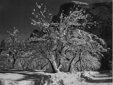 Yosemite National Park, California, Apple Tree, Trees