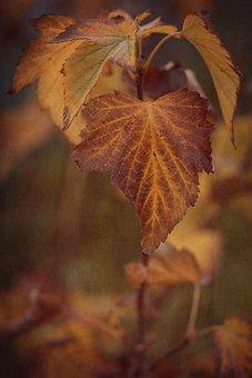 Autumn, Fall Color, Leaves, Fall Leaves, Currant Leaves
