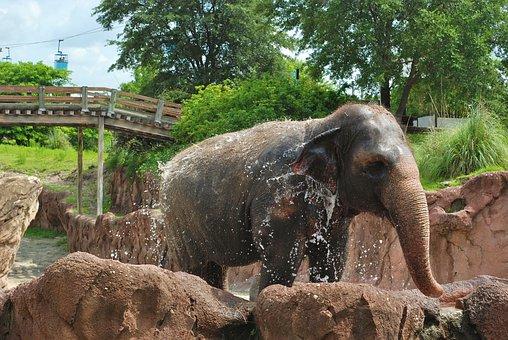 Elephant, Trunk, Baby, Animal, Wildlife, Wild, Zoology