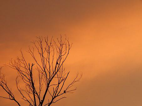 Sunset, Death Tree, Birds On Tree, Orange Tree