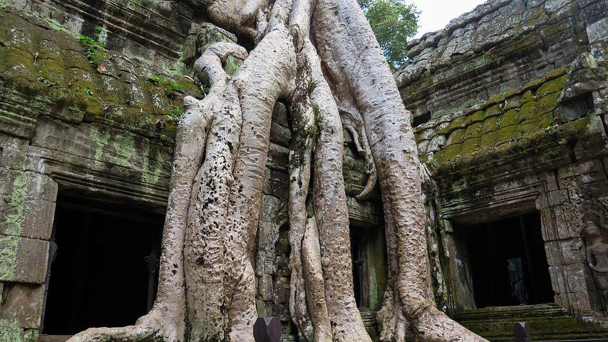 Cambodia, Angkor, Temple, Ta Prohm, History, Asia