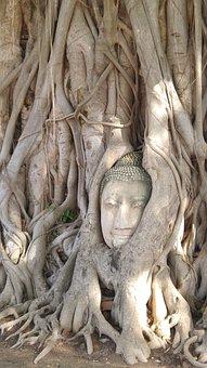 Ayuthaya, Buddha, Head, Tree
