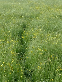 Meadow, Flower Meadow, Spring, Trace, Away, Path, Grass