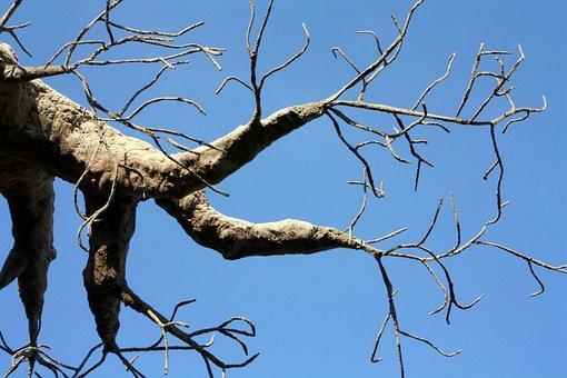 Tree, Hands, Fingers, Baobab, Bottle Tree, Monkey Bread