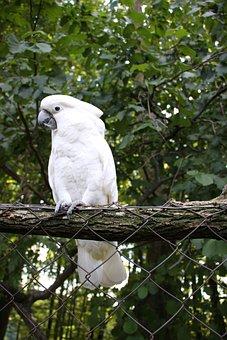 Parrots, Kakadu, Bird, Nature, White, Parot, Animal