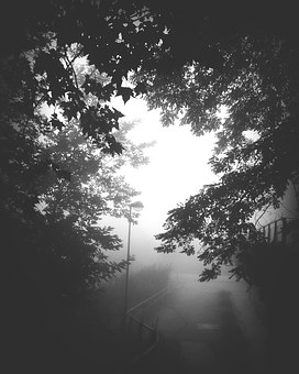 Old, Retro, Forest, Street Lamp, Fog, Black And White