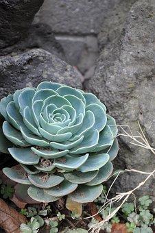 Flowers, A Fleshy Plant, Fleshy In This, Plants