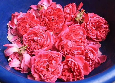 Fresh Roses, Potpourri, Aromatherapy, Flower