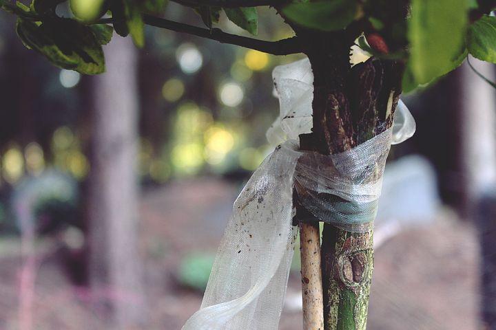 Tree, Loop, Mourning, Mourning Loop, Funeral, Leaves