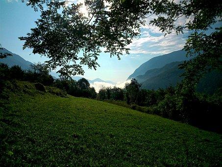 Natur, Green, Tree, Nature Background, Breginjski Kot