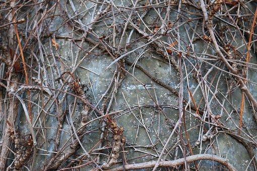 Branches, Braid, Aesthetic, Plant, Blätterlos, Stems