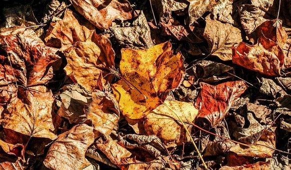 Autumn, Fallen Leaves, Maple, Poplar, Oak, Fall