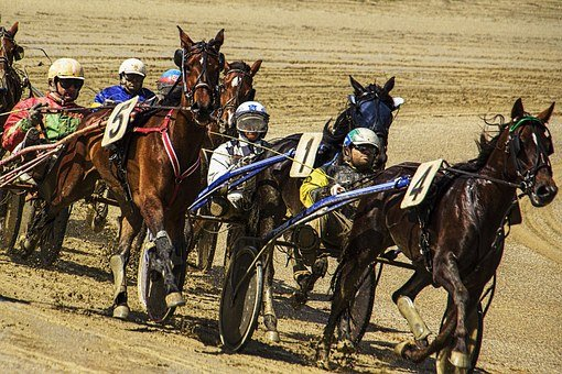 Sporty Fight, Trotting, Race, Horse, Sport, Ride, Brown