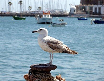 Seagull, Sea, Atlantic, Cascais, Portugal, Boot