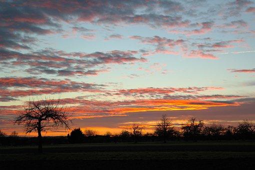 Sunset, Orchard, Tree, Apple Tree, Swabian Alb
