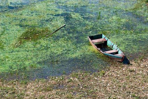 Nature, Boat, Water, Summer, Lake, Blue, Green, View