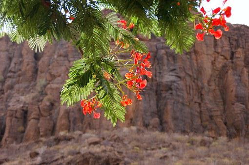 Gan Canaria, Bush, Tree, Aesthetic, Leaves, Flowers
