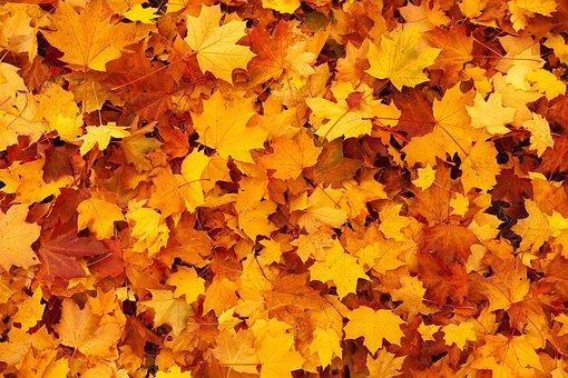Autumn, Background, Color, Fall, Foliage, Gold, Leaf
