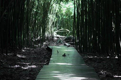 Bamboo, Forest, Bamboo Forest, Green, Nature, Plant