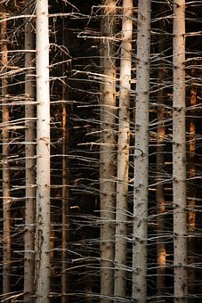 Abstract, Background, Bark, Branch, Brown, Forest