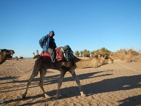 Desert, Wüstentour, Camel